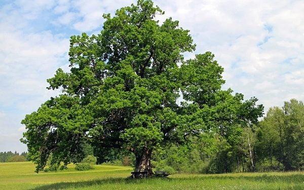 L'arbre, une clé pour comprendre l'histoire des sociétés