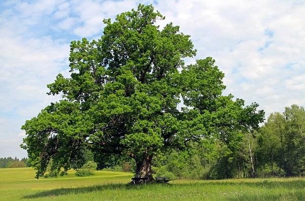 arbres Mce expo-arbres-claire-bonnet