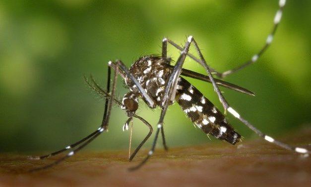 Inventaire citoyen du moustique tigre