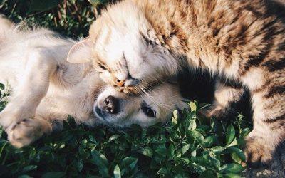 Téléconsultation vétérinaire pour animaux de compagnie : enquête !