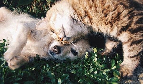 teleconsultation_veterinaire_chien_chat