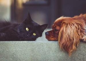teleconsultation_veterinaire_chien_chat2
